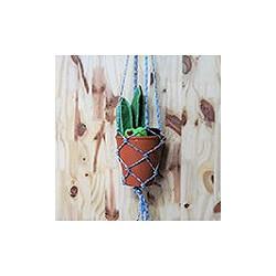 Cactus suspendus