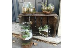 Atelier Terrarium  EN DUO - 5 à 8 plantes
