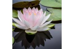 L'aromthérapie pour rester zen