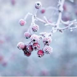 L'aromathérapie pour lutter contre les maux de l'hivers