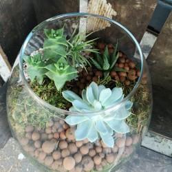 Atelier Terrarium 3 plantes