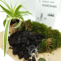 KIT FABRICATION KOKEDAMA (+ TUTO VIDEO)